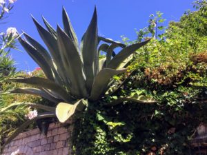 Here is a giant agave growing on top of another wall - Ryan was amazed with all the plants.