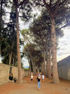 Also in Pompei, an allee of ancient evergreens.
