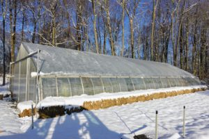 Here is one of my five greenhouses not far from my stable and chicken coops. My tropical plants have been ready for winter for quite some time - we moved them into these temperature controlled structures back in October. Bales of straw are placed around the greenhouse to keep it even more insulated.