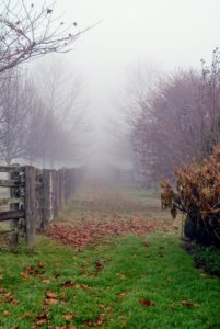 This is a view of my newer linden tree allee, which extends from the old corn crib to my vegetable garden - it's very hard to see down the allee through the fog, but on a clear day, the view is gorgeous.
