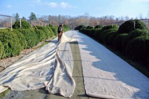 When it isn't possible to use older pieces, we create new covers. Because the burlap comes in 48-inch wide and 60-inch wide rolls, it's necessary to sew lengths of burlap, so it is wide enough to cover the boxwood. Burlap is relatively inexpensive and available at garden centers.