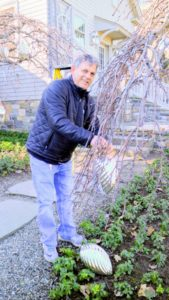 Fernando places the kugels on strong branches that can carry the weight of the ornaments. Keep in mind, strong winds are likely during the holiday season, so make sure all the ornaments are well-secured.