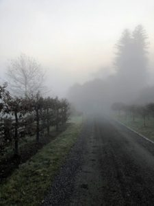 I took these photos before 7am. Fog reduces visibility quite a bit. This is the carriage road nearest my home. It is hard to see the road past my Gravenstein apples on the left.