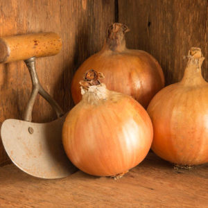 Yankee onions are medium-large globe-shaped bulbs with good skins and healthy tops. (Photo from Johnny's Selected Seeds)