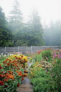 "This is my flower cutting garden at Skylands. The cutting garden is in the same location as my vegetable garden. When I am there, I love going out and cutting fresh stems to fill my containers. (Photo from ""Martha's Flowers"")"