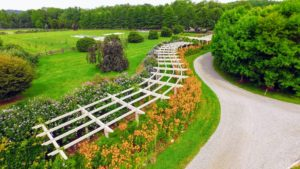 I love designing beautiful flower gardens. This is a drone photo of my long and winding pergola - we had such a stunning show of lilies last summer - I loved seeing more and more of the blooms open each day.