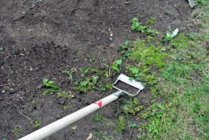 This Dutch hoe has a forward facing 14-centimeter wide blade which slices through established and seedling-stage weeds.