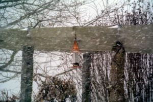 I was so glad to see so many birds feasting at the feeders. This is a tough time for our wild birds – they are very hungry. I make sure their bird feeders are refilled every day, and give them leftover bread whenever possible – they love it.