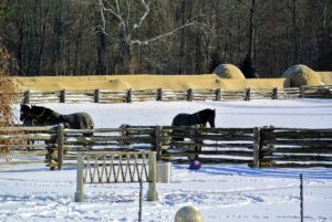 My Friesians always enjoy their time outdoors, but it is bitter cold, so their outing is not long - just a couple hours to let them stretch their legs.