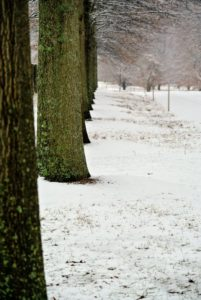 In the Pin Oak Allee, the snow just covered the tree pits and lawns. We've had quite a bit of snow this season, but each fresh coating is always so pretty.