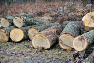 We also store old logs - we use logs for various projects, but we also mill the logs, put them through the tub grinder or the chipper, or split and stack them for firewood. If I cannot save a tree, it is comforting to know I can reuse the wood left behind.