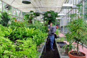 The next stop - the main greenhouse to see all my tropical plants. Another tip - always inspect new plants - many pest infestations originate from new plants brought into the growing area.