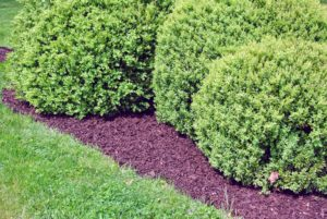 In spring, the boxwood beds are also top dressed with mulch – they always looks so well manicured.