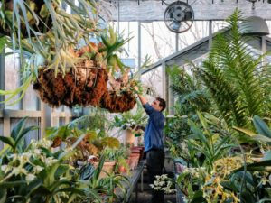 And here is Ryan sprinkling it in the main glasshouse, where I store many of my precious staghorn ferns, begonias, orchids, succulents and other potted plants.