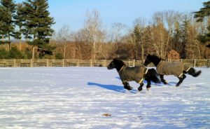 I am so happy to see them enjoying themselves - see you soon, my dear horses.
