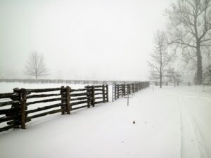 It is so windy, snow did not collect on the cross bars of this 100-year old white spruce fencing I purchased in Canada.