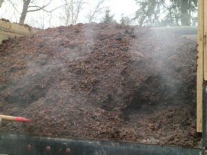 Healthy organisms in the compost will be active and produce steam even in winter. This rich compost is generating a lot of steam, but it is all safe, and a great sign of good, usable material.