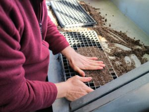 Ryan fills the seed starting tray with potting mix and pats it down lightly into each compartment. The mix should be level with the top of the tray.