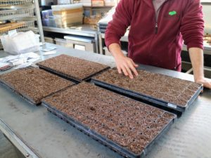 To create a quarter-inch deep furrow in the middle of each compartment, Ryan presses two fingers gently into each cell.