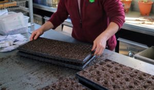 For multiple trays, Ryan places one tray over another and presses down lightly, so the bottom of one tray makes indentations in the soil-filled compartments of the other.