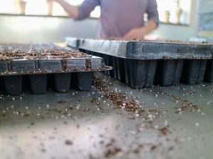 Seed starting trays come in all different sizes and depths. We use trays with shallow compartments for planting onion seeds. These trays and a lot of our supplies also come from Johnny's.