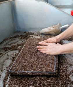 It's best to use a pre-made seed starting mix that contains the proper amounts of vermiculite, perlite and peat moss. Seed starting mixes are available at garden supply stores.