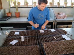 Fortunately, my greenhouse is large and can accommodate lots of seed starting. Ryan will continue to sow lots of seeds over the next few months.