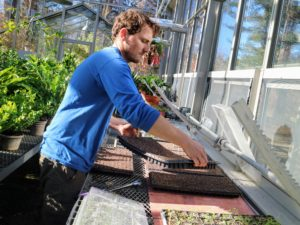 After the trays are filled, Ryan moves them into the temperature controlled greenhouse where they will get lots of good light.