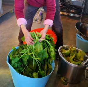 Next, Laura cleans a whole tub of tender, leafy spinach.