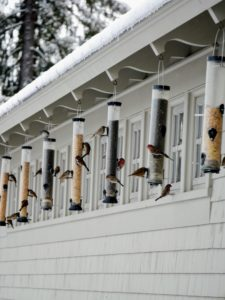 Just above the dwarf apple espalier is a row of bird feeders for all the avian critters that visit. There are about 125 different types of birds that visit my farm.