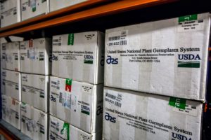 Many boxes came from the United States National Plant Germplasm System. (Photo by Michael Poliza)