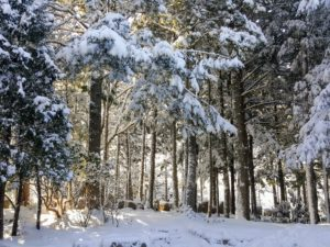 The trees always look so pretty covered in snow. In this area are lots of hemlock, cedar and spruce trees.