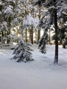 This week, the area got about seven or eight inches of new snow, but it is sometimes hard to tell the true snow accumulation from the drifts.
