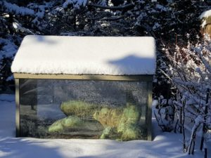 And here is Aristide Maillol's 'La Riviere' - all tucked away for the winter in her glass and copper house.