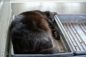 On this day, Blackie found a seed tray that seemed perfect for a mid-morning after-brushing nap.