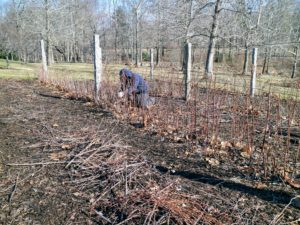 Another big chore we always do during these colder months, oftentimes in between other farm projects, is prune the berry bushes that grow in the gardens around my main greenhouse.
