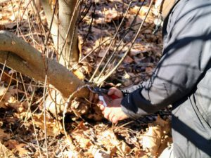 Pete uses pair of pruners to cut off the lower overgrowth.