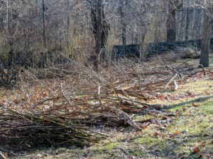 We try to be very neat when doing any chores on the property. It is easier to stack all branches for removal or chipping right in the woods.