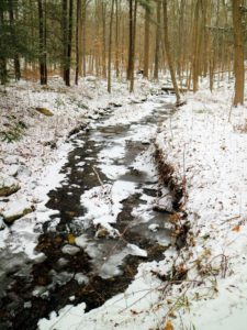 The woodland streams are full – they look so dark against the winter white.