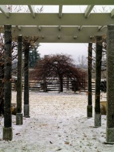 And here is a view looking through the pergola to one of six weeping hornbeams, Carpinus betulus Pendula, on the other side of the Party Lawn. These are such graceful and shapely specimen trees, very densely branched and adaptable to various soil conditions. By afternoon, the snow showers turned to rain - washing away much of the snow cover.
