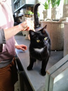 Blackie is a shorthaired cat, so Ryan brushes his coat once a week and checks it for ticks and burs every day.