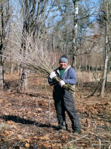 Here's Wilmer with another bunch of branches. Pruning makes picking reachable and quick to pick.