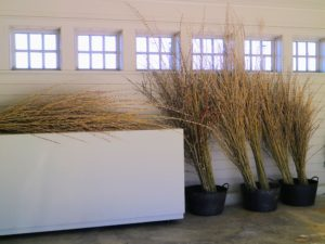 Cutting branches for indoor displays is an excellent use of these pussy willow catkins. I am looking forward to making pretty arrangements – they will look gorgeous in my Brown Room.