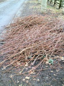 As branches are removed, they're gathered and placed into a tidy pile, so they can be taken to the wood chipper later.