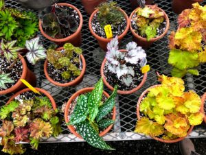 I am so very pleased with these additions to my greenhouse. I am looking forward to seeing them mature and thrive.