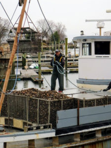 With each run, cages and cages of oysters are brought back to the docks for unloading and sorting.