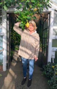 Here I am standing under the Solandra maxima. This evergreen vine can spread to 40-feet.