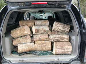 Chris then fills the work truck with the logs ready to be planted with mushrooms.