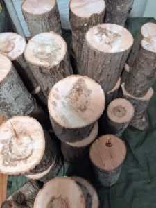 The two to three foot tall stumps are gathered and placed in a location that shaded where the bulk of the growing season maintains a daytime temperature of 60 to 80 degrees Fahrenheit.
