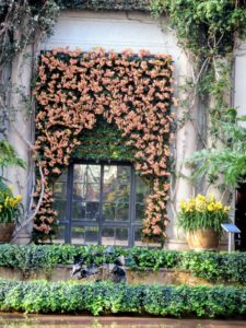 At the back of the Fern Floor is this custom fabricated orchid curtain featuring 350 Phalaenopsis 'Kaleidoscope'.